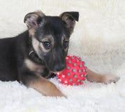 Klein zwart en geel puppy die naast bal op bontbank liggen Stock Foto's