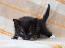 Klein zwart katje Stock Fotografie