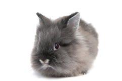 Klein zwart konijntje dat op witte achtergrond wordt geïsoleerdn Stock Foto