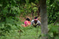 Kleinbauern, die an ihrem eigenen Ackerland arbeiten Lizenzfreie Stockfotografie