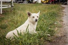 Kleine aandachtige hond om te spelen Stock Fotografie