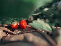 Kleine aardbeien stock foto's
