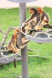 Kleine Affen Lizenzfreie Stockfotos