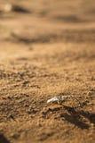Kleine Anlage, die in der Wüste wächst Stockfotos