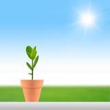 Kleine Anlage und Sonne Lizenzfreie Stockfotos