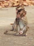 Kleine apen Royalty-vrije Stock Foto