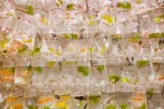 Kleine aquariumvissen binnen de reeks plastic zakken op dierentuinmarkt stock fotografie