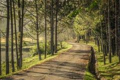 Kleine asfaltweg door het bos Royalty-vrije Stock Afbeeldingen