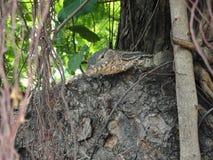 Kleine asiatische Eidechse auf einem Baum mitten in Bangkok lizenzfreie stockbilder