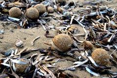 Kleine Bälle auf dem Strand Stockbilder
