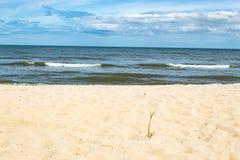 Kleine Bäume auf dem Sand durch das Meer stockfotos