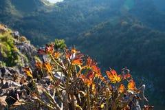 Kleine Bäume auf Klippe ` Lizenzfreies Stockfoto
