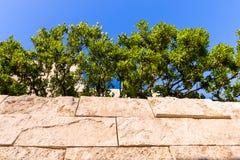 Kleine Bäume pflanzten an der Spitze einer Travertin bedeckten Wand, Kalifornien stockbilder