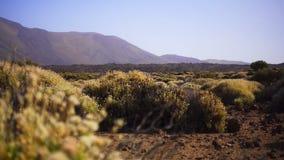 Kleine Büsche auf einem Hintergrund von Bergen stock footage