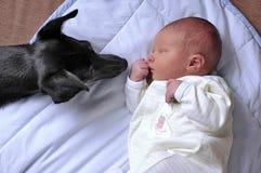 Kleine baby en hond Royalty-vrije Stock Foto's