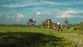 Kleine Balinese familieoptocht met dienstenaanbod tussen padievelden stock video