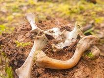Kleine beenderen van dood dier Royalty-vrije Stock Foto's