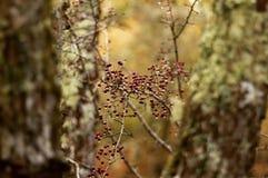 Kleine Beeren Stockfotos