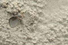 Kleine Befestigungsklammer auf Sandy-Strand Lizenzfreie Stockfotografie