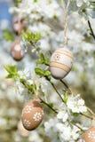 Kleine beige Ostereier, die an den Niederlassungen eines blühenden Kirschbaums hängen Lizenzfreies Stockbild