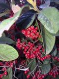 Kleine bessen in de boomclose-up stock afbeeldingen