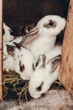 Kleine bevlekte konijnen die in een kooi zitten Stock Fotografie