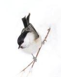Kleine birdy op sneeuw stock foto's