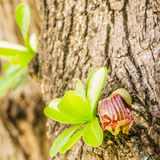 Kleine Blätter und Blume des mexikanischen Kalebasse-Baums stockbild