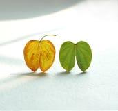 Kleine bladeren Stock Afbeelding