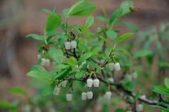 Kleine blasse Blumen Stockfotografie