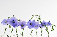 Kleine blaue Blumen Stockbild