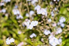 Kleine blaue Blumen Stockfotografie