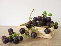 Kleine blauwe druiven van tuin Royalty-vrije Stock Afbeelding