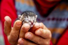 Kleine blinde Miezekatze in den Händen der Frau Äusserung der Liebe FO Lizenzfreies Stockfoto