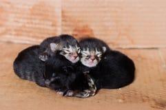 Kleine blinde neugeborene Kätzchen, die in einer Pappschachtel schlafen Lizenzfreie Stockfotos