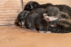 Kleine blinde neugeborene Kätzchen, die in einer Pappschachtel schlafen Stockfotos