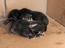 Kleine blinde neugeborene Kätzchen, die in einer Pappschachtel schlafen Stockbild