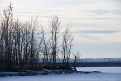 Kleine bloße Winter-Bäume durch einen gefrorenen See Lizenzfreie Stockbilder