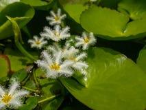 Kleine bloem Stock Foto
