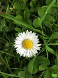 Kleine bloem Royalty-vrije Stock Afbeelding