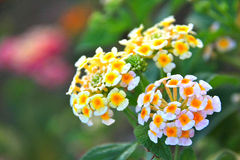 Kleine bloem Stock Fotografie