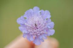 Kleine Bloem in Macrofotografie stock afbeeldingen