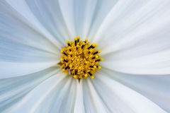 Kleine Bloem in Macrofotografie stock foto