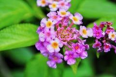 Kleine bloemen stock fotografie