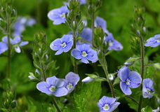 Kleine bloemen Stock Foto