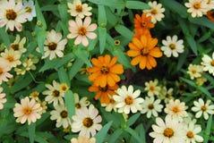 Kleine bloemen Royalty-vrije Stock Fotografie