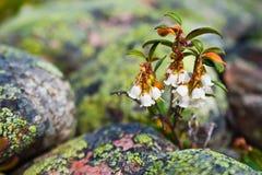 Kleine bloemen royalty-vrije stock foto's