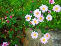 Kleine bloemen Royalty-vrije Stock Afbeeldingen