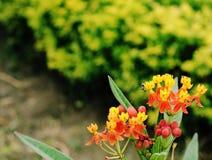 Kleine bloemen Stock Foto's