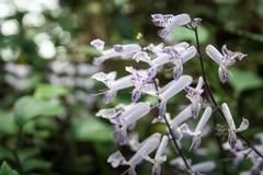Kleine bloemen Stock Afbeelding